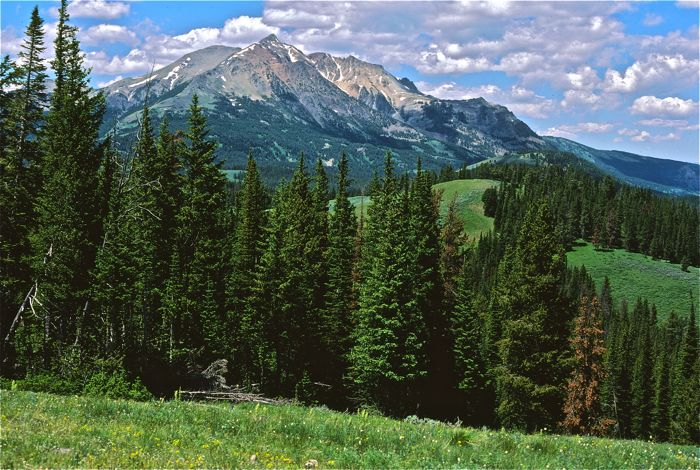 Yellowstone National Park Backpacking Guided Hikes