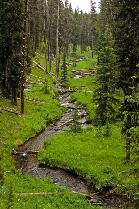 Backpacking Yellowstone Guided Hikes in the Gallatin Range