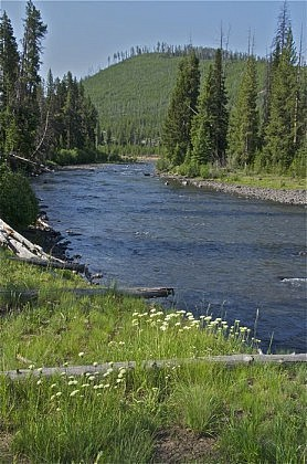 Upriver at Timothy Creek