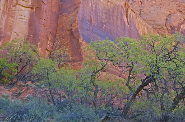 Utah Canyon Country Tours